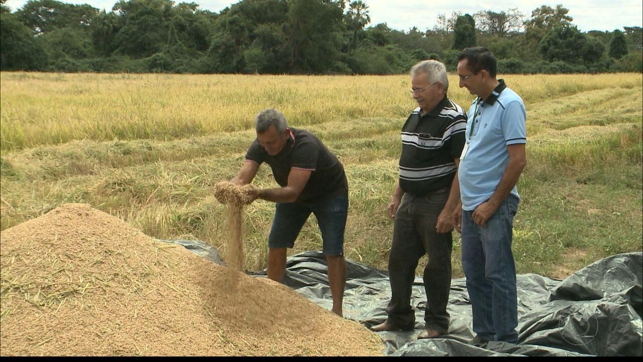 'Paraíba Rural' mostra produção do arroz vermelho na Paraíba