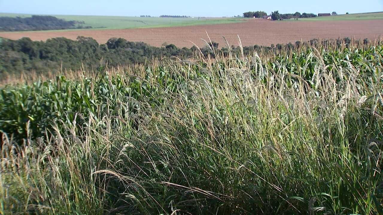 Agrônomo explica o que são plantas daninhas e como combatê-las
