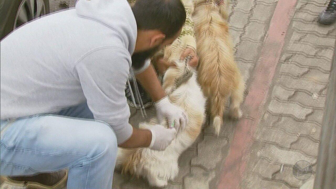 Prefeitura de Barueri realiza Campanha de Vacinação contra Raiva em agosto