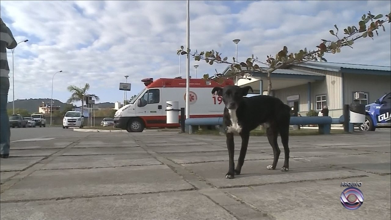 Há quase dois anos, cão espera dono que morreu em hospital