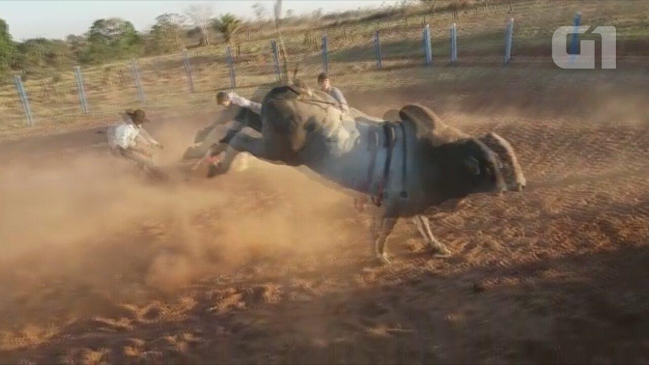 Peão morre após levar coice de boi em treino de montaria, em Cerejeiras, RO