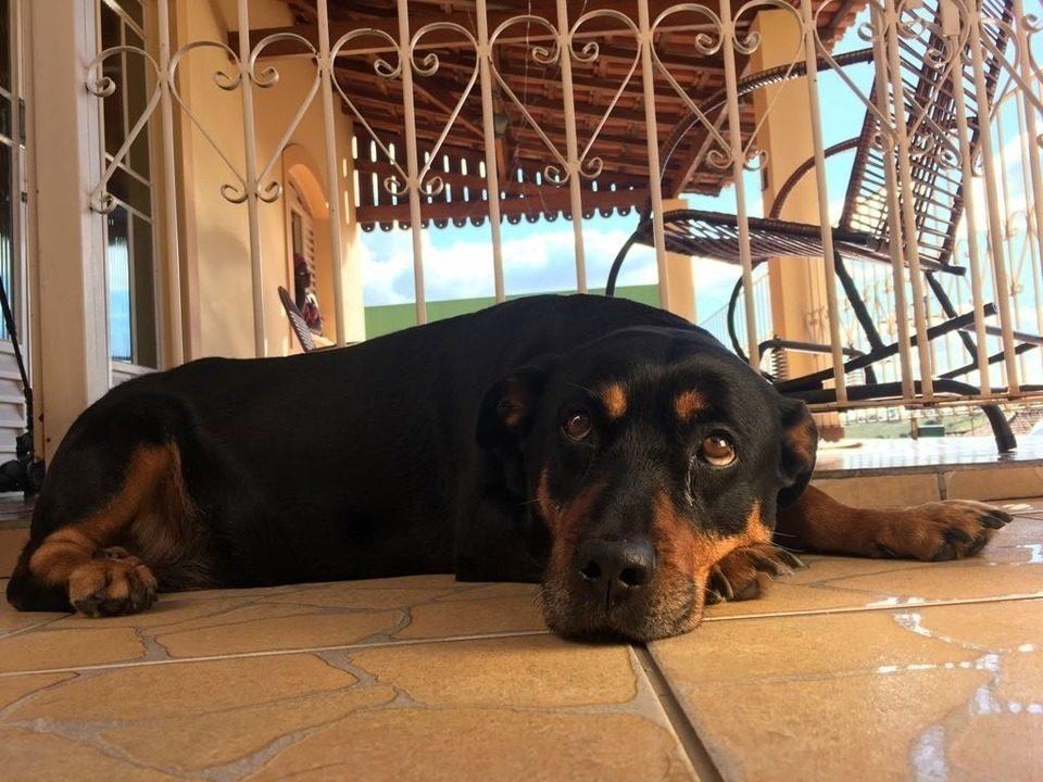 Rafael Ristow conhece a cachorrinha Laila, que ajuda sua dona na hora das compras