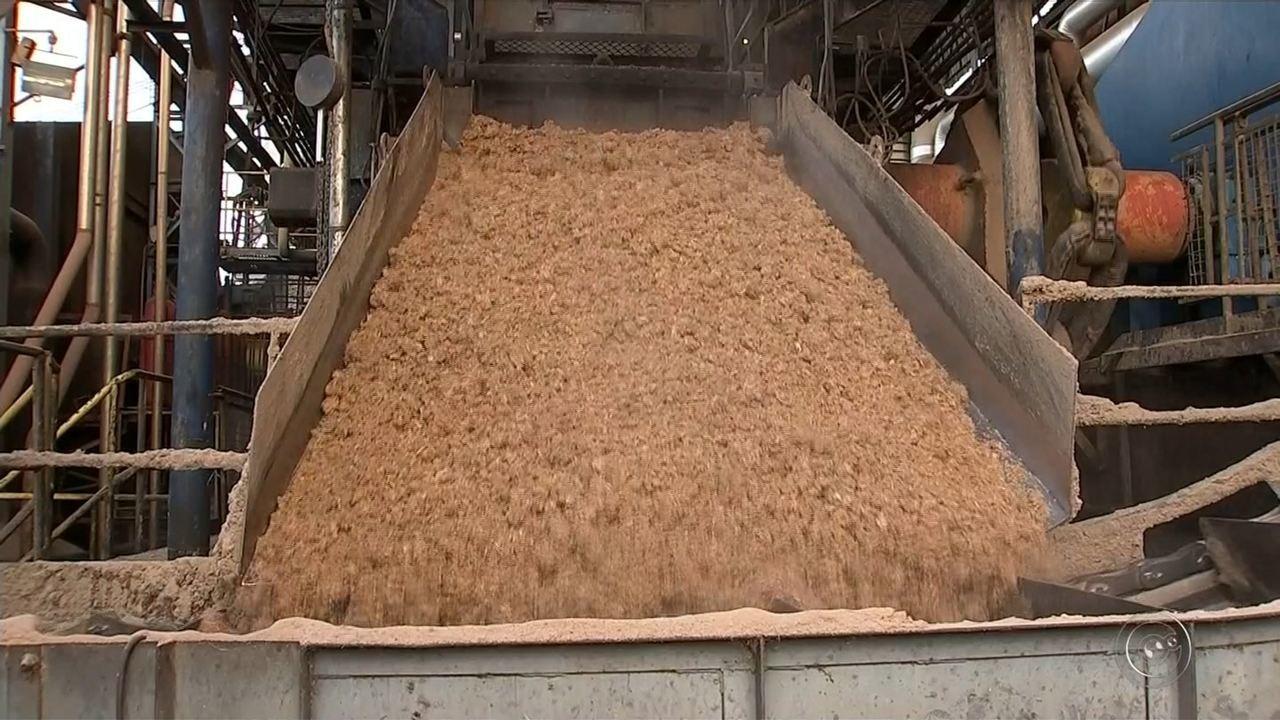 Agricultores transformam matéria orgânica em energia para usinas na região