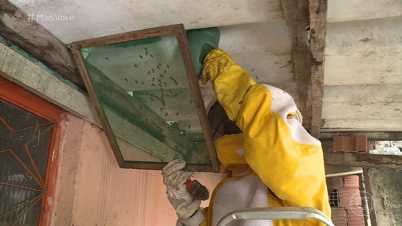 Apicultor mostra a retirada de enxame de abelhas do telhado de uma casa no Rio de Janeiro