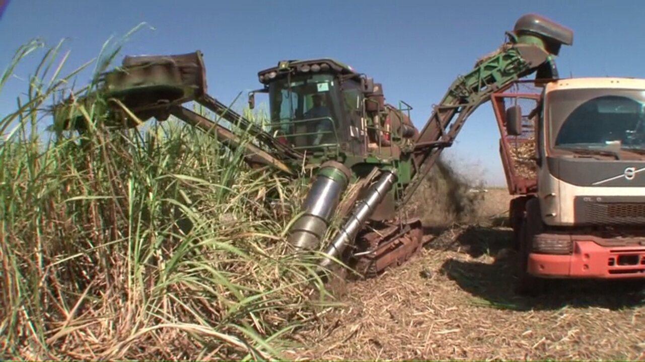 A queima que precede a colheita manual da cana está com dias contados no Paraná