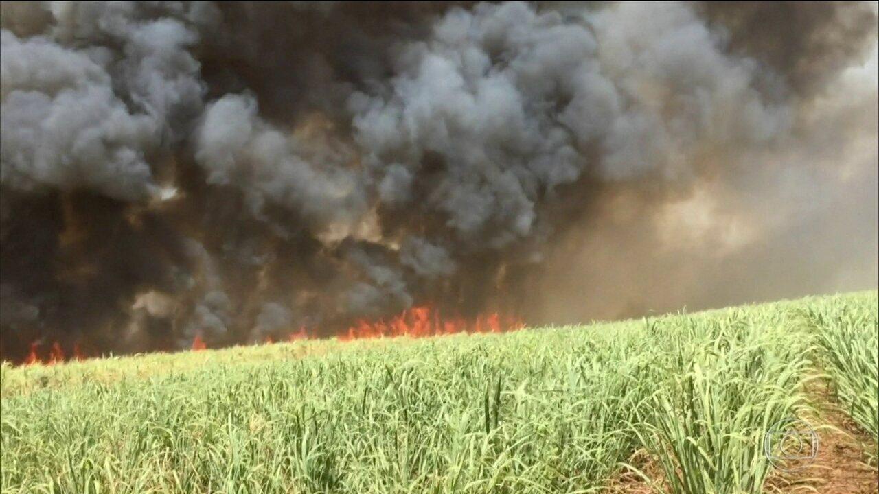 Incêndios criminosos ameaçam áreas de conservação no Tocantins