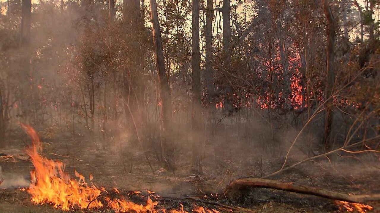 Bombeiros continuam no trabalho de combate ao incêndio que destrói a Floresta Nacional