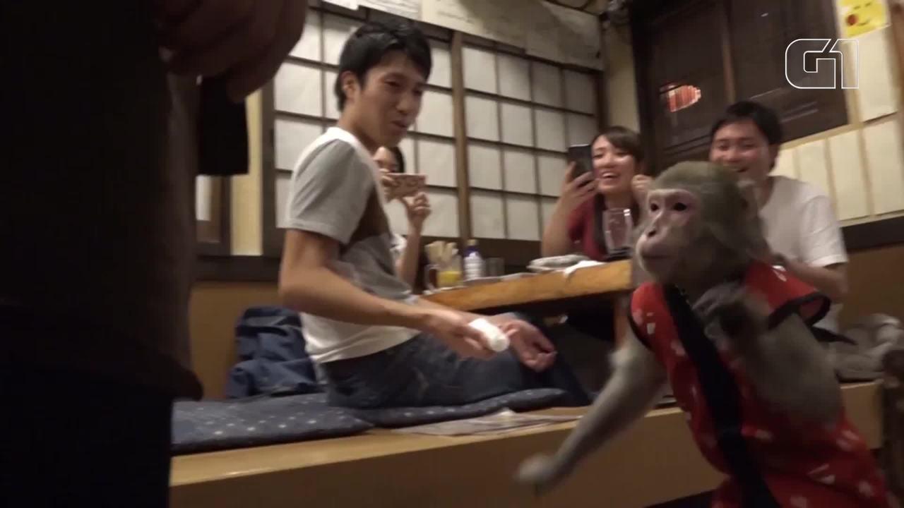 Bar do Japão tem macacos 'garçons'
