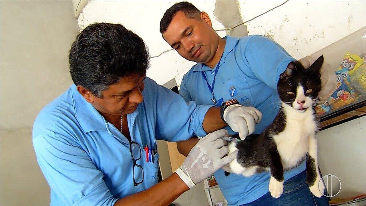 Mais de 100 mil animais foram vacinados em campanha contra a Raiva