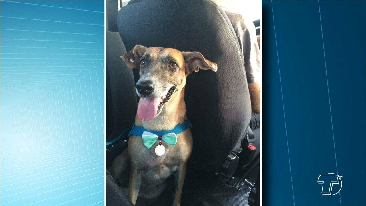 Jovem com paralisia cerebral procura cadela de estimação que desapareceu em Santarém
