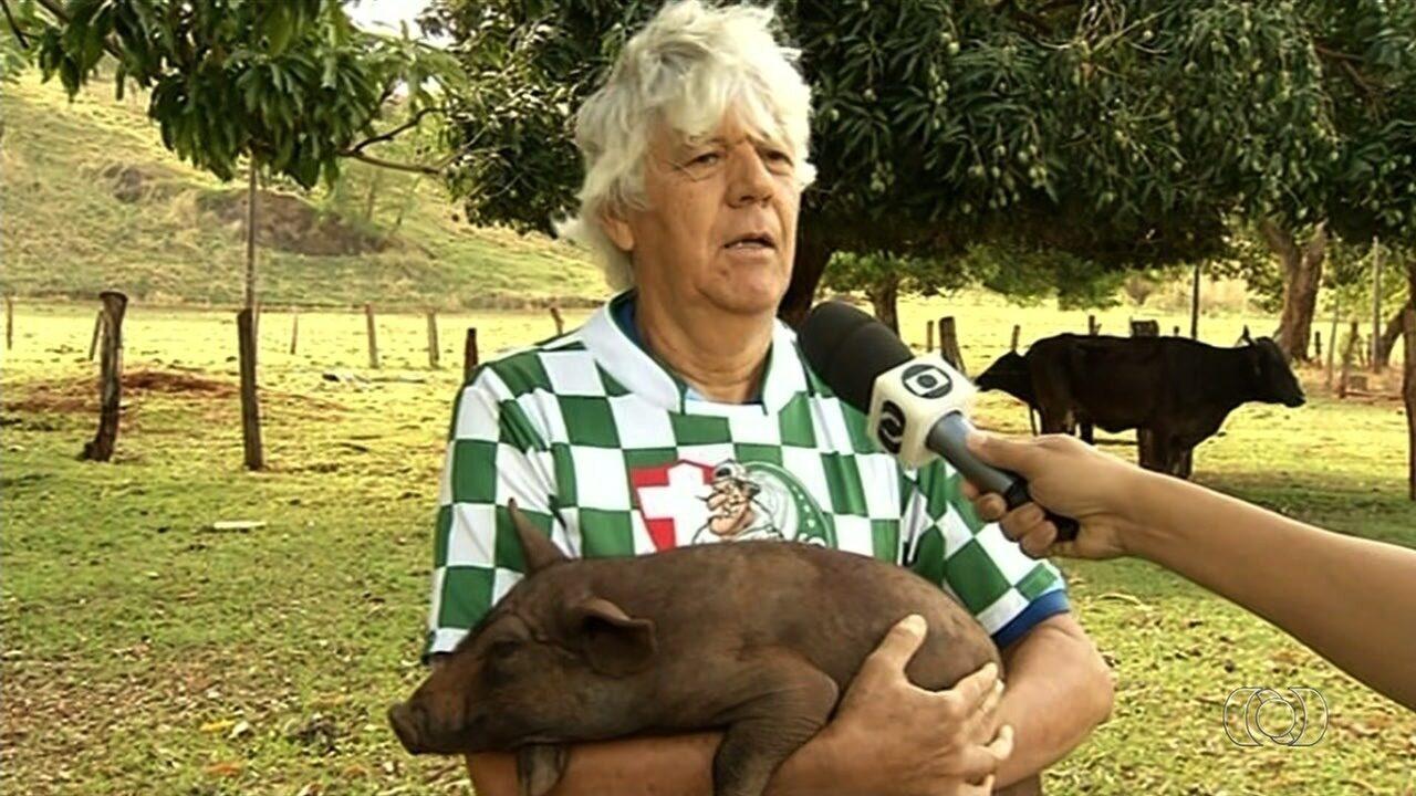 Torcedor que levou porco ao estádio diz que não maltratou o animal