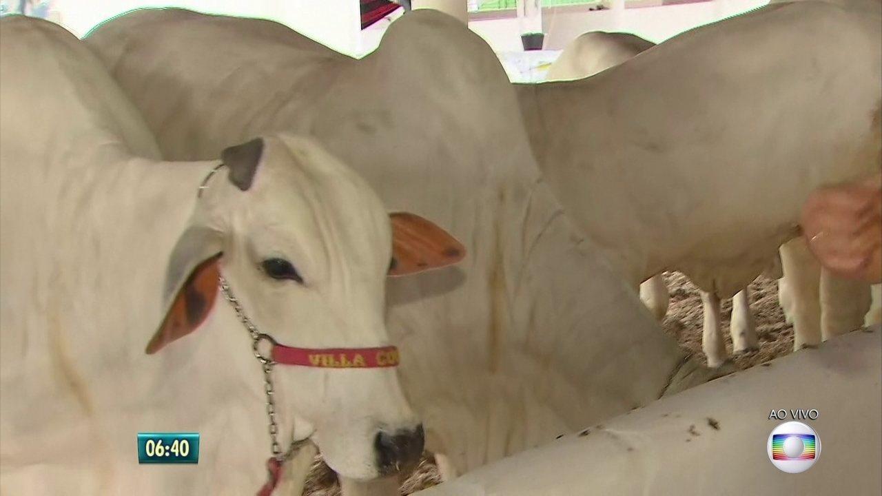 Exposição de animais reúne criadores e pecuaristas no Recife