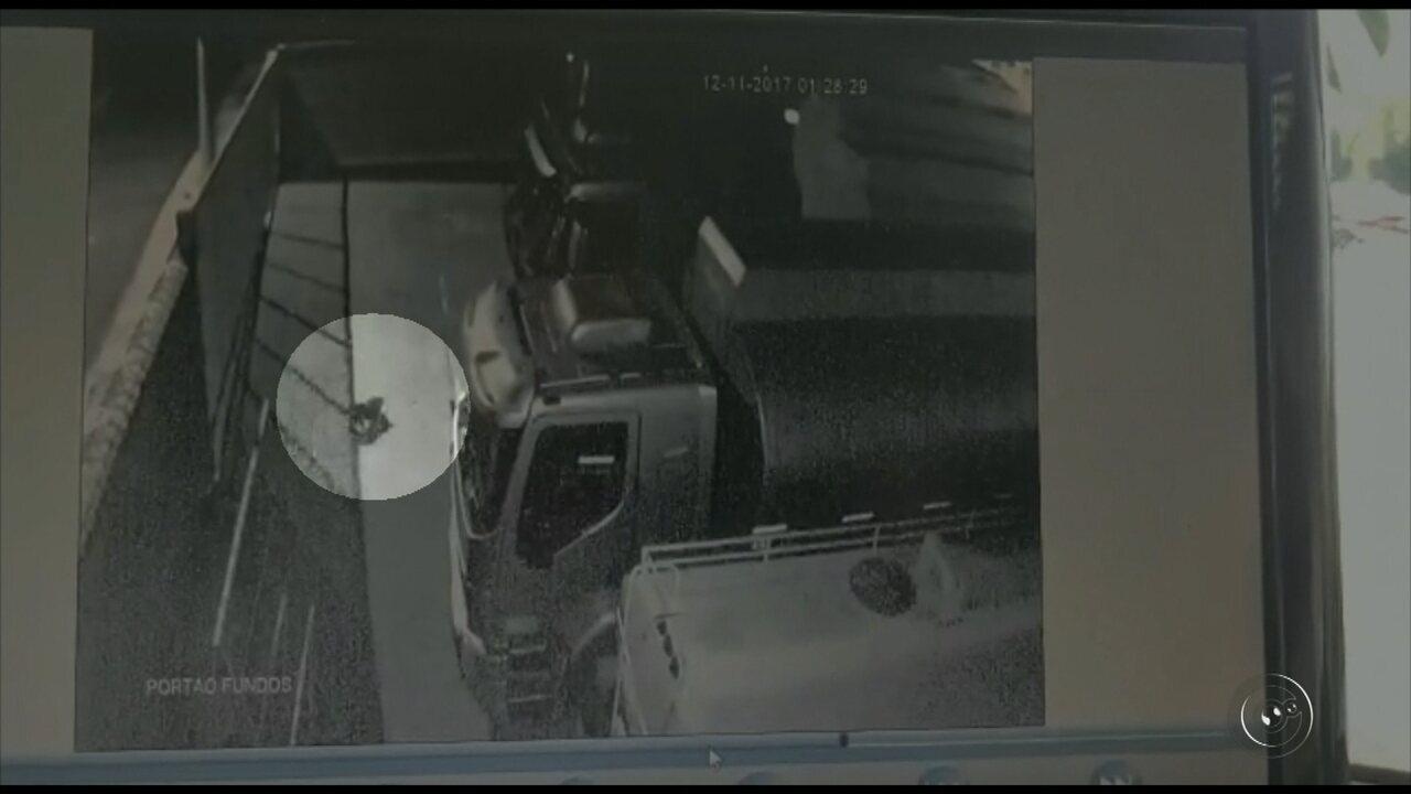 Câmera registra cachorro sendo lançado por cima de muro em posto de Rio Preto