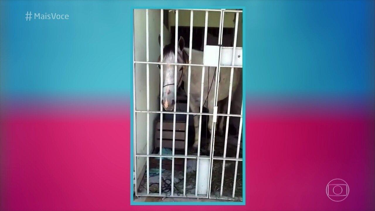 Ana Maria comenta notícia de prisão de um cavalo em Sergipe