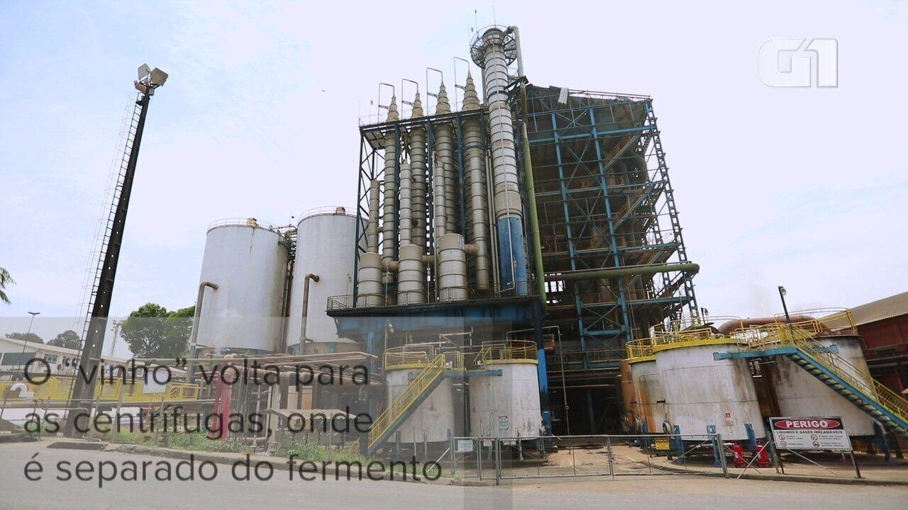 Como se transforma a cana-de-açúcar em etanol