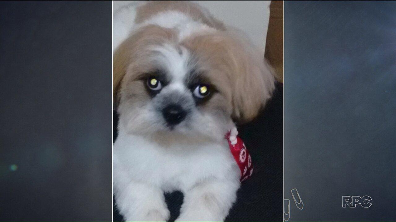 Polícia recupera cachorro que tinha sido roubado para chantagens