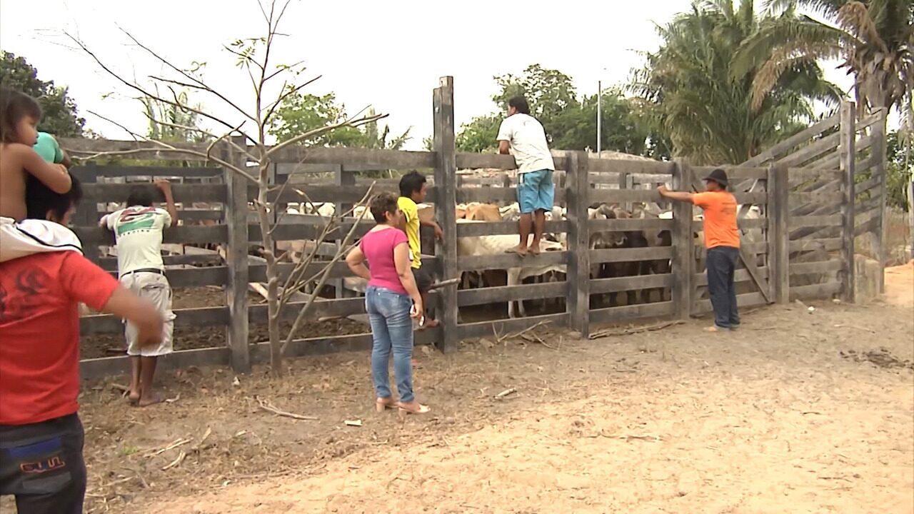 Mirante Rural - Programa de domingo, 10/12/2017, na íntegra