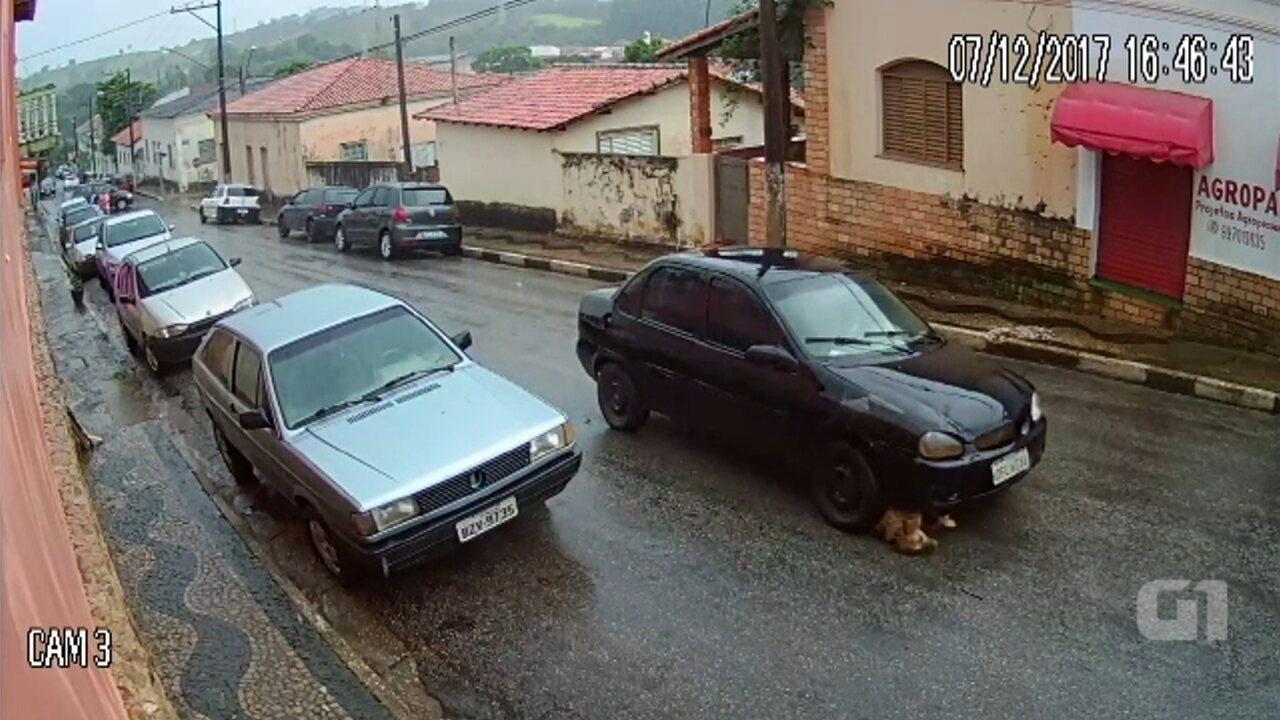 Motorista atropela e arrasta cachorro em Angatuba