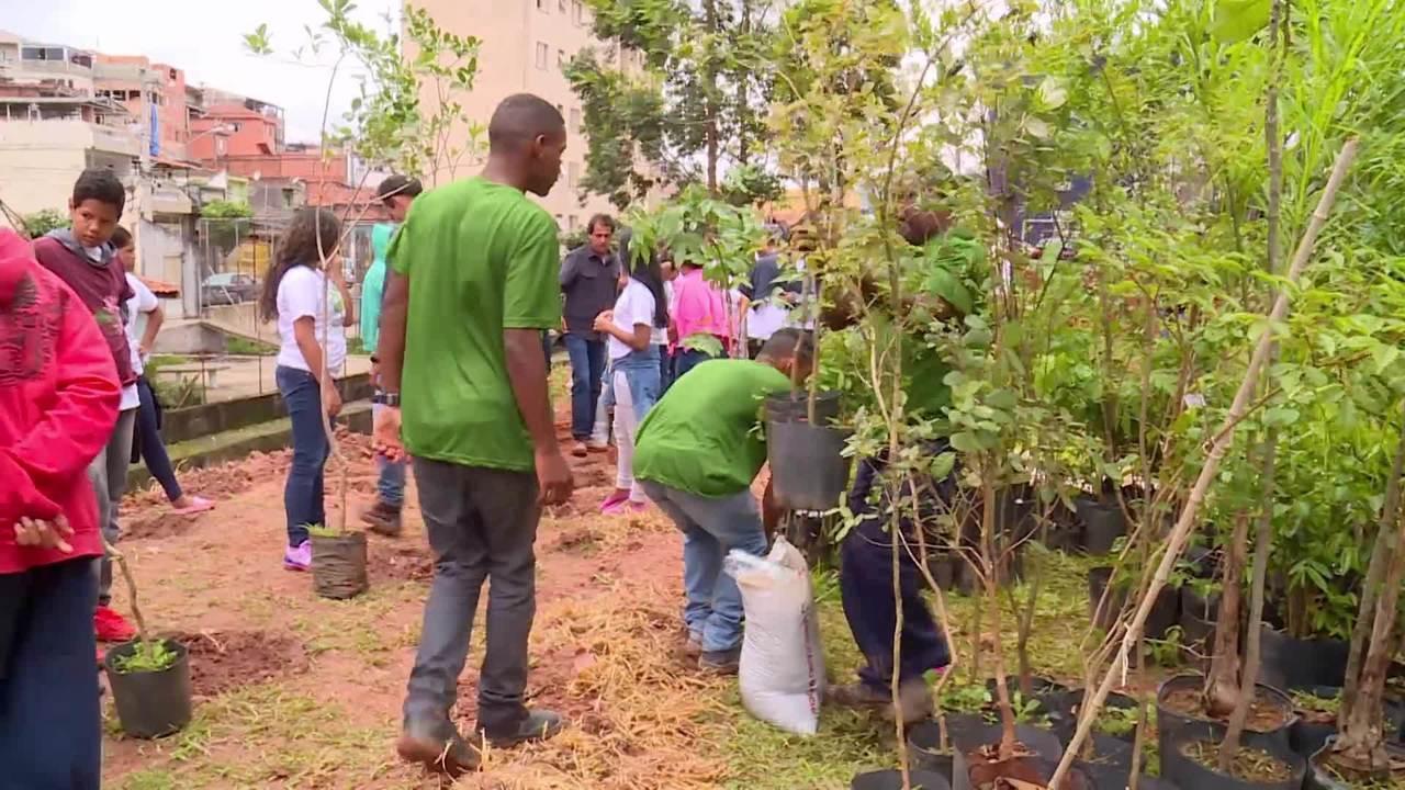 Caldeirão ajuda escola a construir floresta urbana em São Paulo