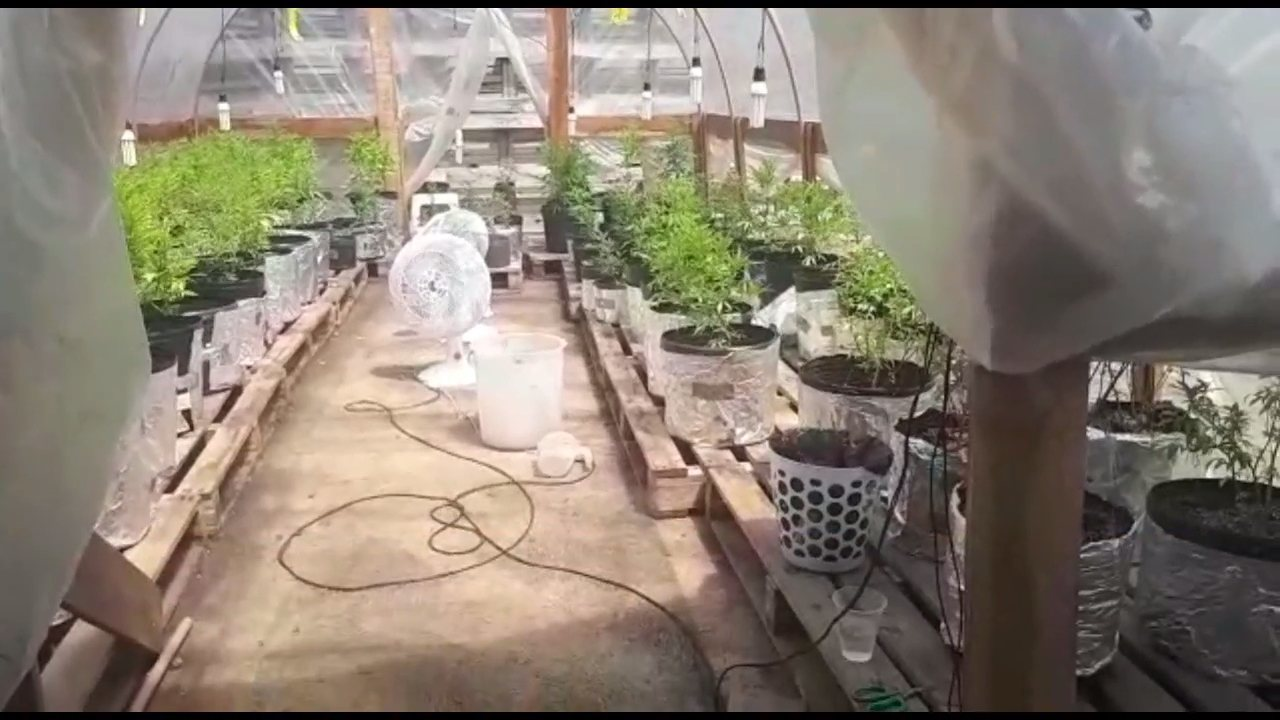 'Centro de reabilitação' de usuários de drogas abrigava uma plantação de maconha