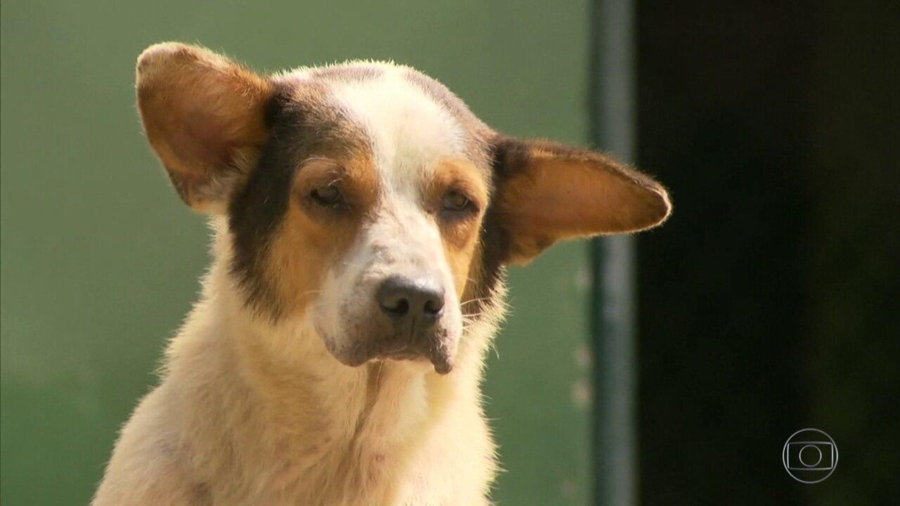 Único abrigo animal da Prefeitura é interditado pela polícia