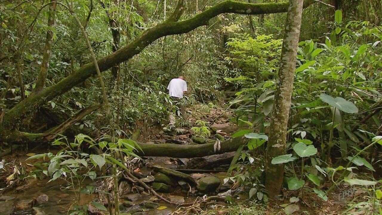 Macacos são encontrados mortos no bairro Centenário, em Varginha (MG)