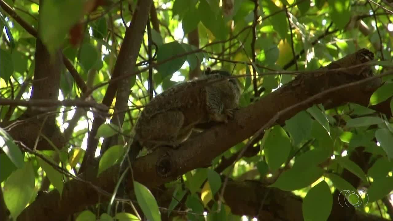 Segundo macaco é encontrado morto no Parque Cesamar em menos de uma semana