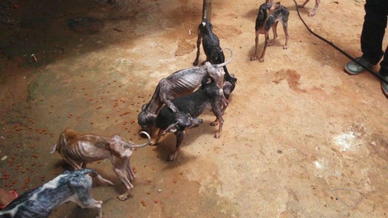 Cães desnutridos e machucados são resgatados em casa na Serra, ES