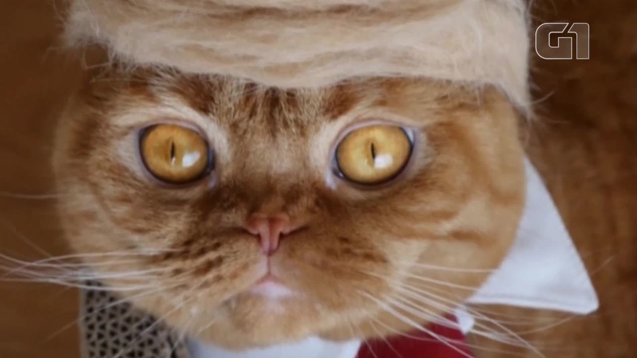 Resultado de imagem para Artista japonesa cria chapéus e peruca de Trump para gatos fotos