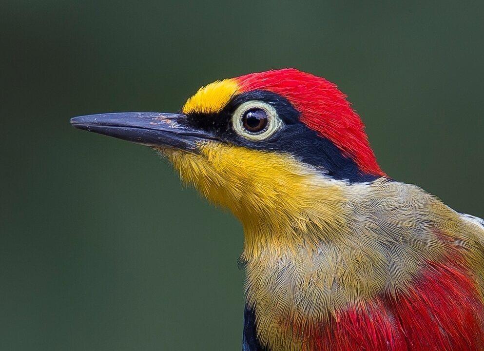 Aves coloridas são destaques no Carnaval