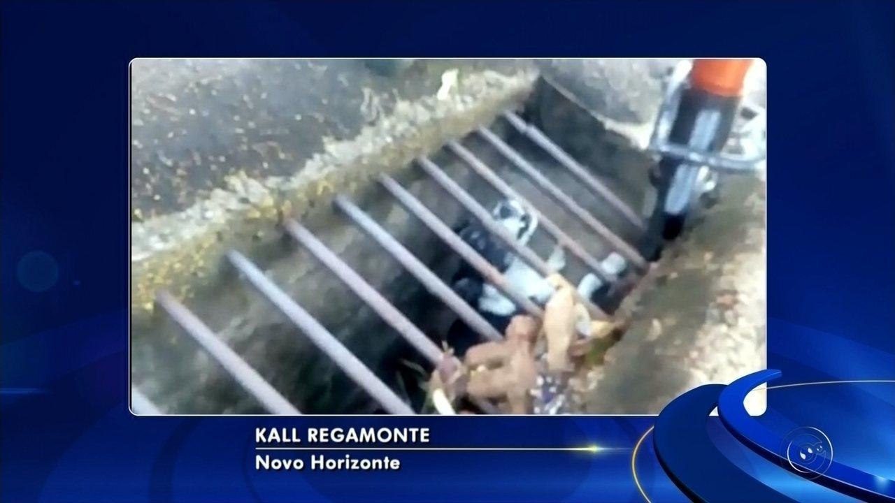 Bombeiros de Novo Horizonte resgatam cachorro preso em bueiro
