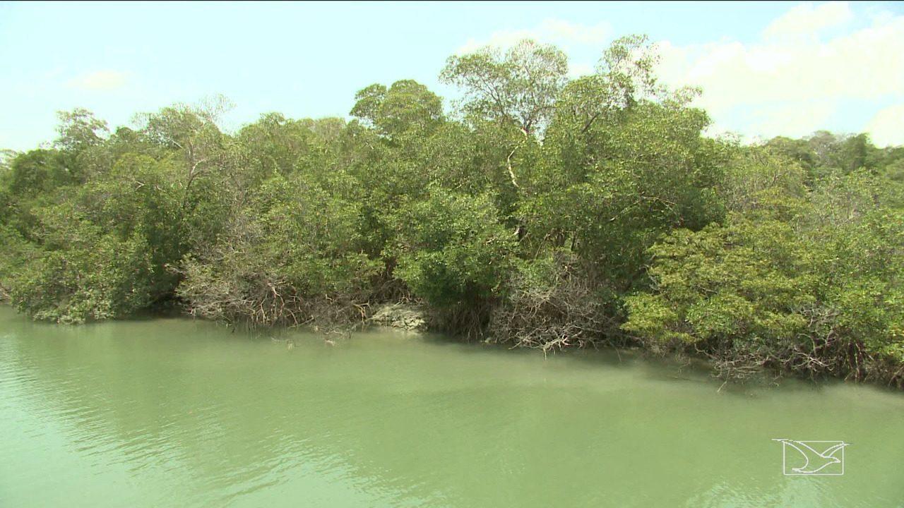 MPF entra com ação para conter ocupação em áreas de manguezal em São Luís