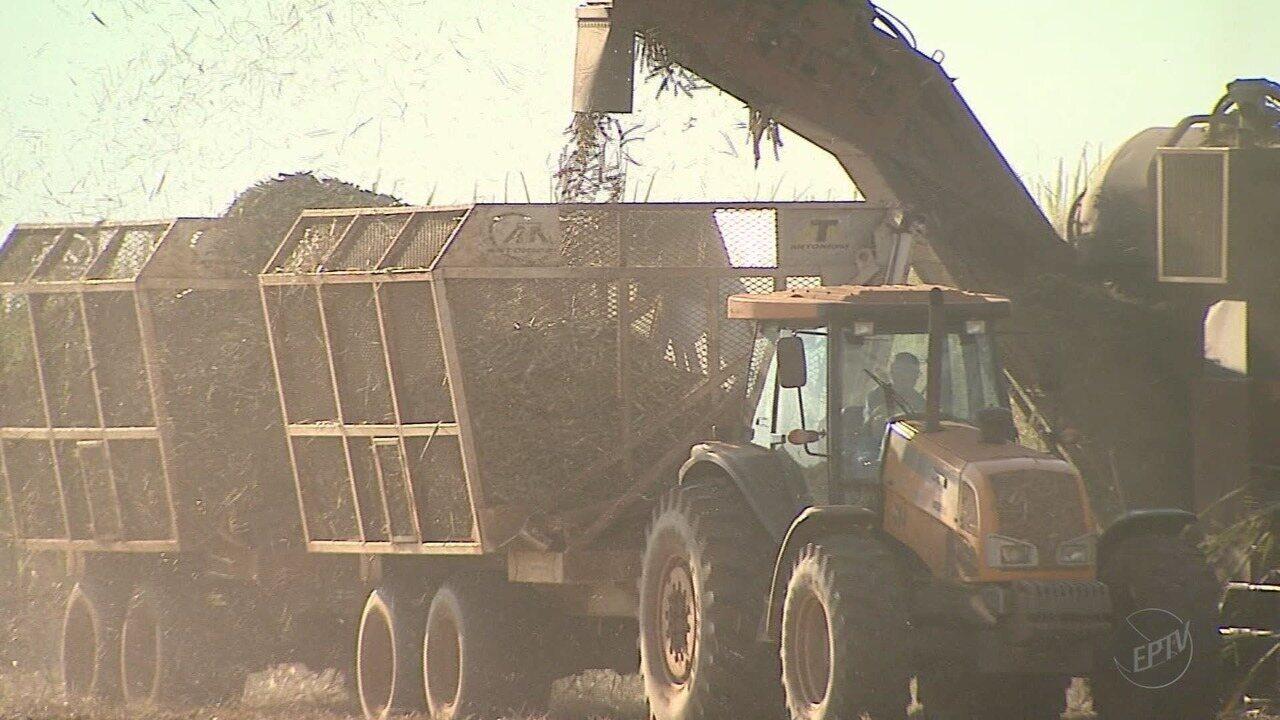 Início da safra da cana-de-açúcar eleva estoque de etanol nas usinas e pode reduzir preço