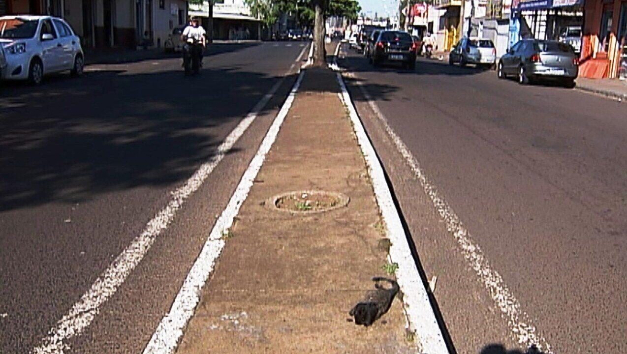 Pela segunda vez, macaco morto é encontrado na Orlando Rodrigues da Cunha em Uberaba
