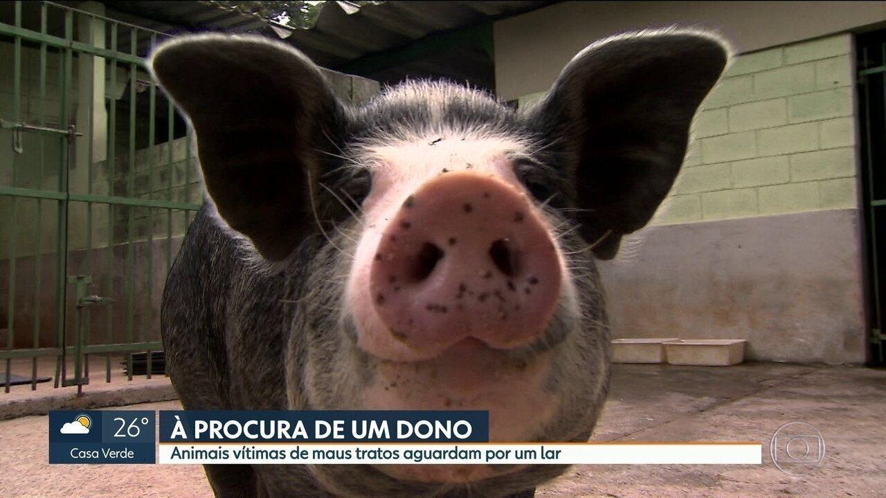Animais vítimas de maus tratos aguardam novo lar em SP