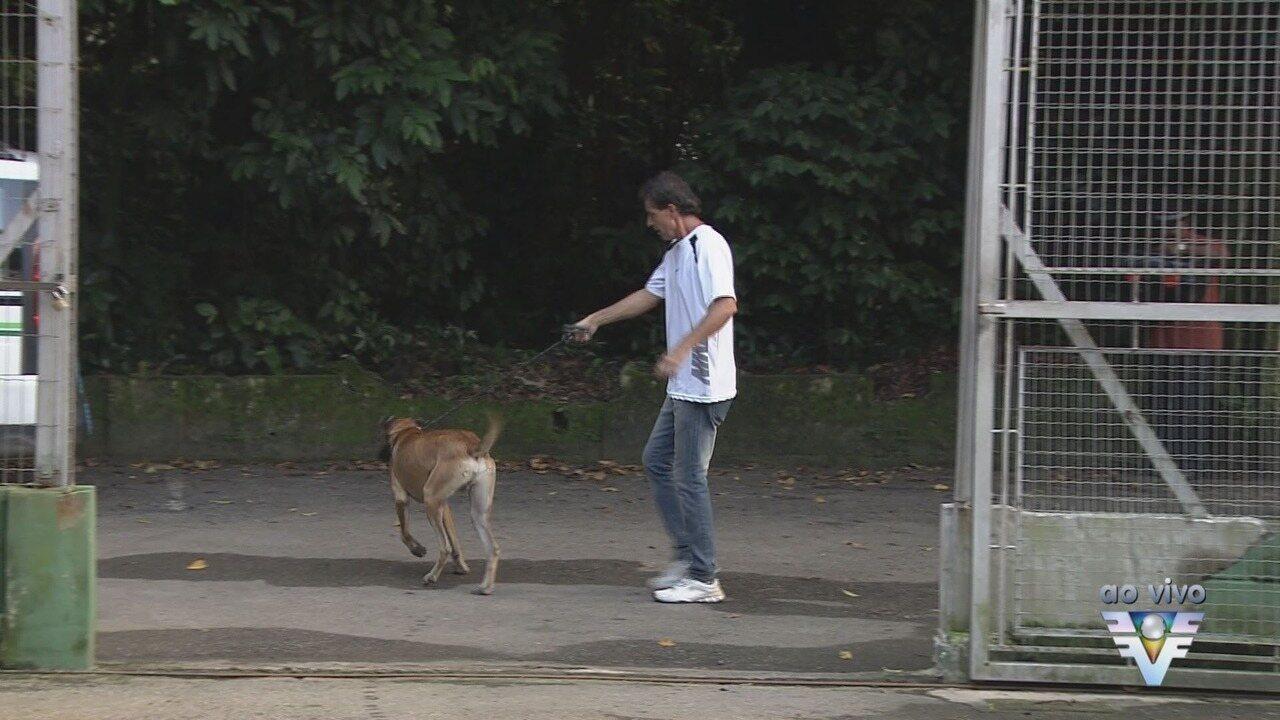 Codevida recruta voluntários para passear com animais da Zoonoses de Santos