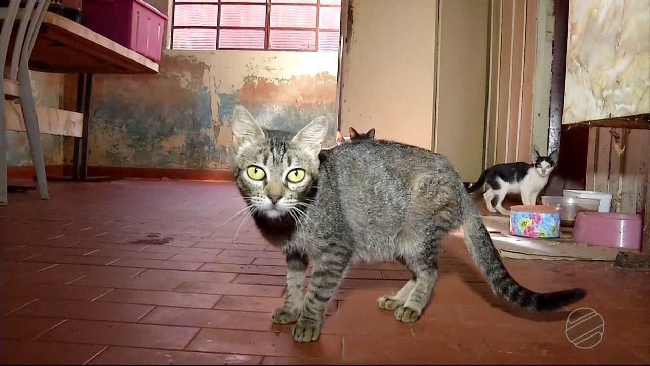 Voluntários encontram 30 gatos vivendo em situação precária em casa de Dourados, MS