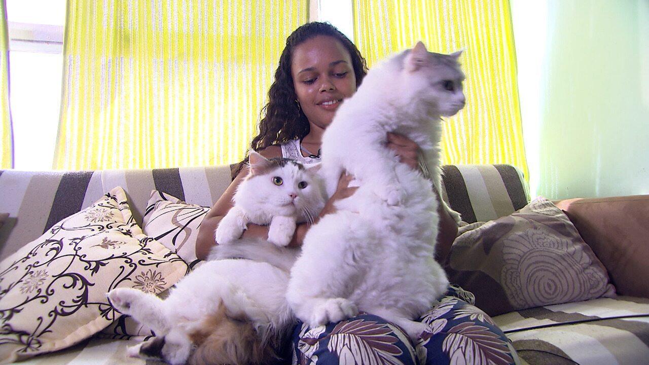 Gatos exóticos roubam a cena e seus donos falam dos seus diferenciais