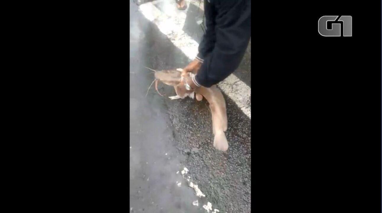 Bagre é encontrado em rua alagada no Centro de Vitória após chuva