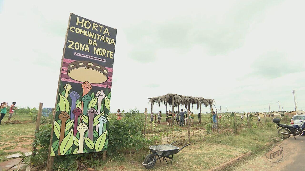Moradores transformam terreno abandonado em horta comunitária em Araraquara, SP