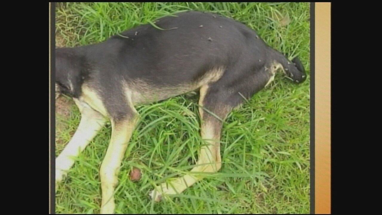Cidades do Sul de SC recebem relatos de cães envenenados