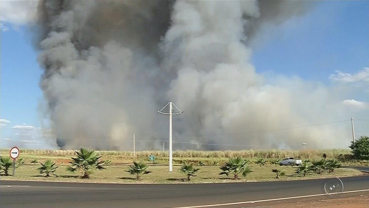 Incêndio em canavial provoca interdição do trânsito na rodovia de Cosmorama