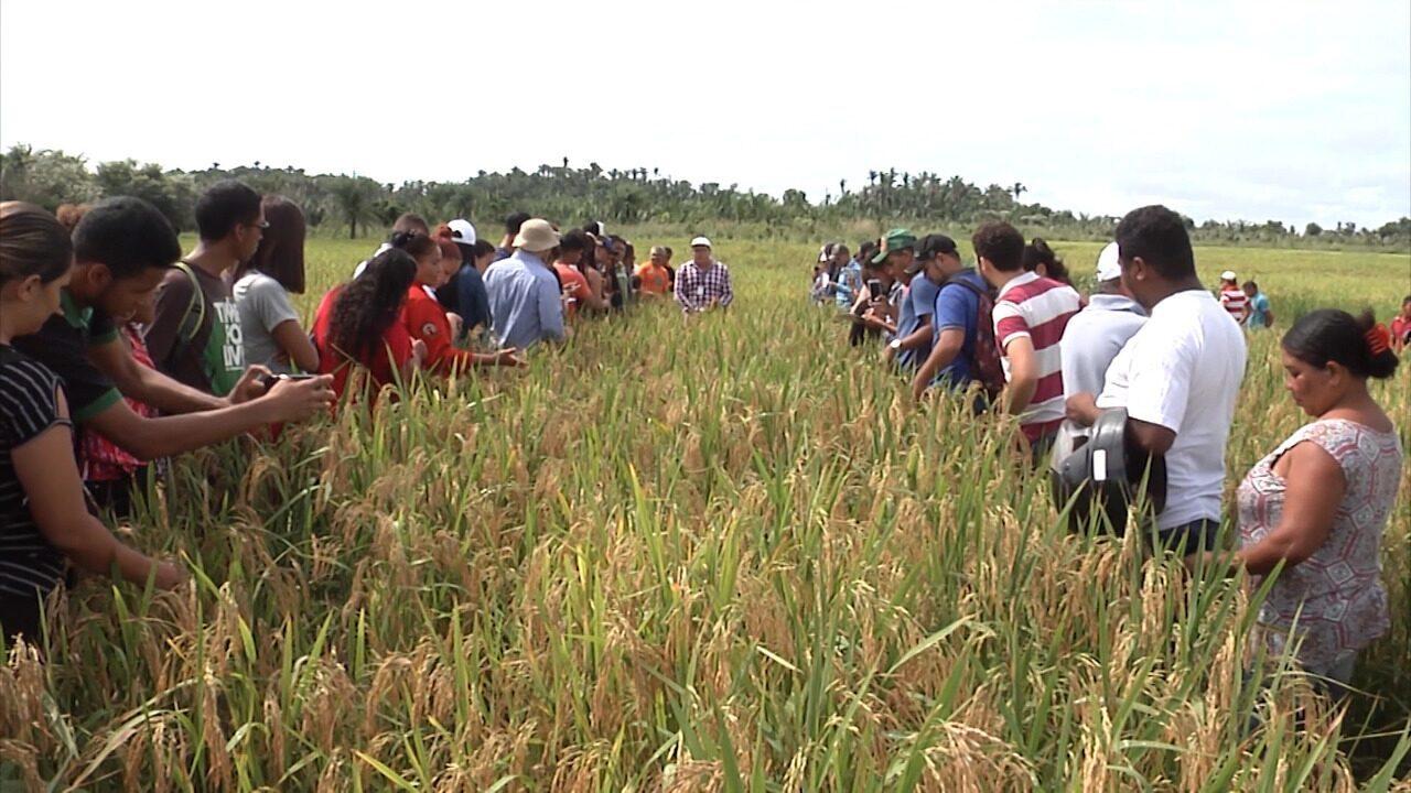 Embrapa promove dia de campo na região leste do Maranhão