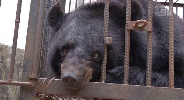 Família chinesa cria urso pensando ser cachorro