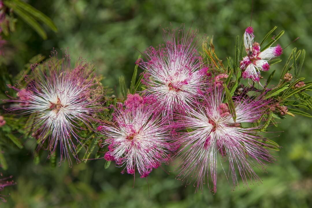 Faça o do seu quintal um jardim para beija-flores