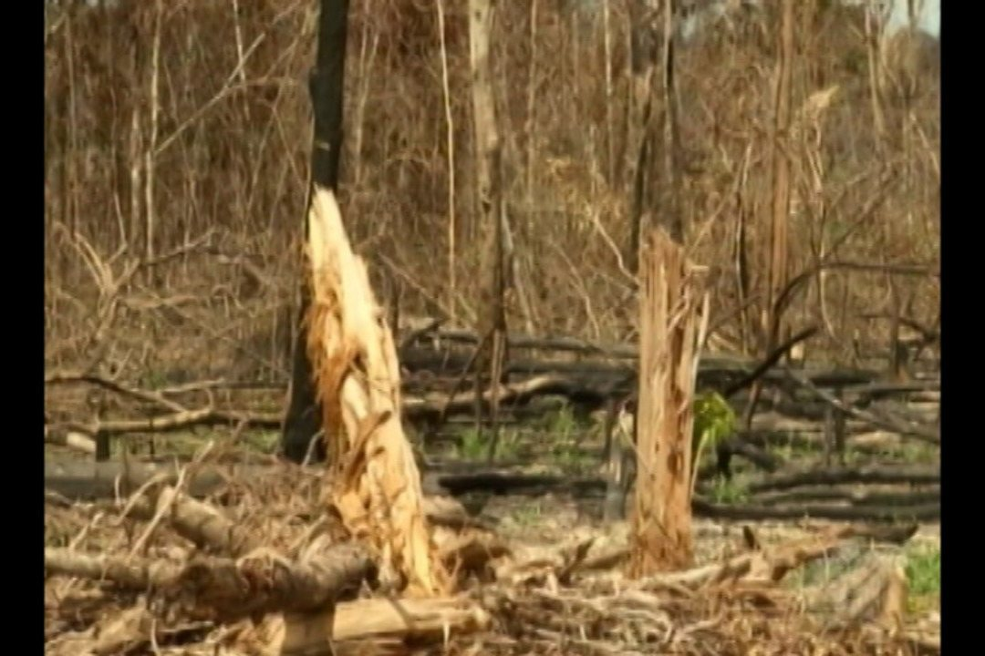 Desmatamento volta a crescer na Amazônia, aponta estudo