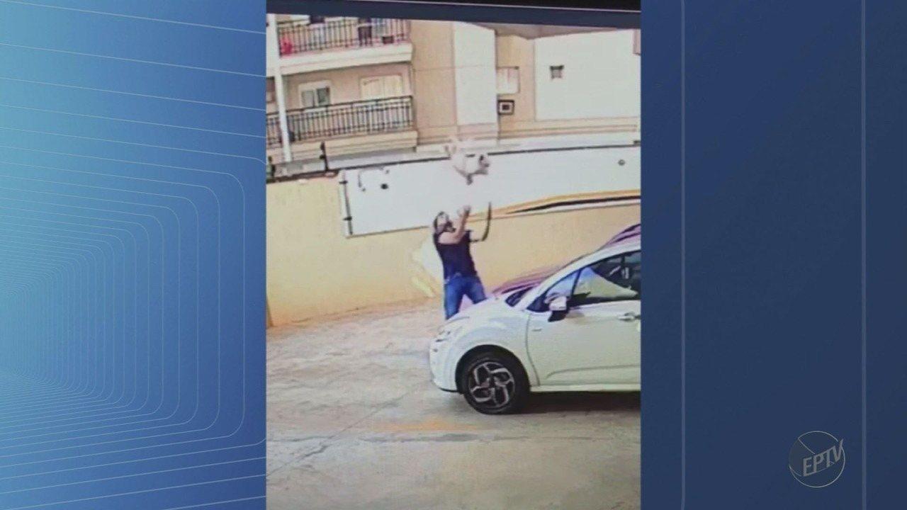 Cão cai de 9º andar de prédio e é salvo por vizinho, em Ribeirão Preto, SP