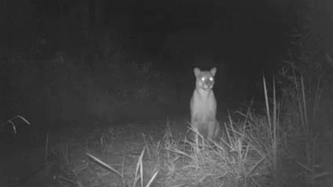 Câmeras com sensores de movimento registram diversas espécies em Rio Claro (SP)