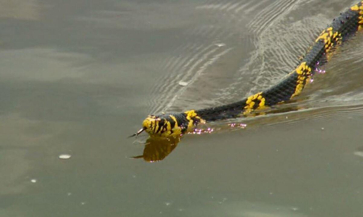 Caninana mostra agilidade na água