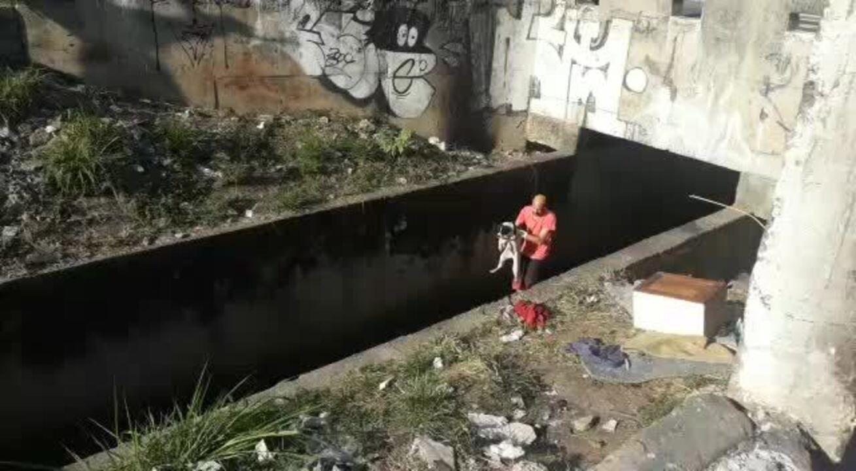 Cão é resgatado na Zona Norte de SP